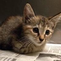 Adopt A Pet :: Austin - West Memphis, AR