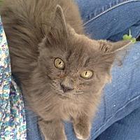 Adopt A Pet :: Harriet - Houston, TX