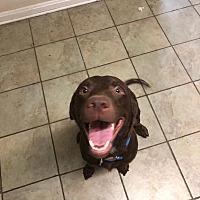 Pet Rescue North Inc In Jacksonville Florida