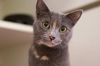Adopt A Pet :: Miranda  - Troy, MI