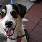 Adopt A Pet :: Kikki