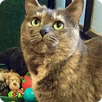 Adopt A Pet :: Storm - Columbia, MD