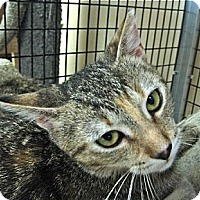 Adopt A Pet :: Penny - Deerfield Beach, FL