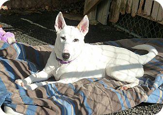 Carmel Ny Bull Terrier Meet Mia A Pet For Adoption
