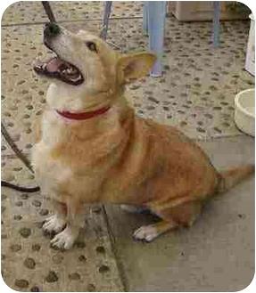 Dog Adoption Huntington Beach