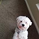 Adopt A Pet :: Blur