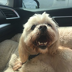 Home at Last Dog Rescue in Surrey, British Columbia