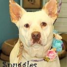 Adopt A Pet :: Snuggles~adopted!