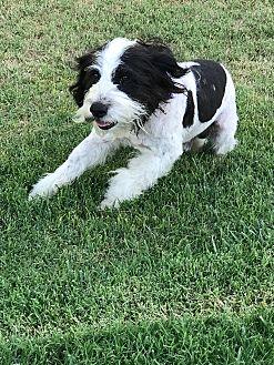 Adopt A Pet :: Theodore Omar, Beaten Severely  - Corona, CA