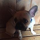 Adopt A Pet :: Tina