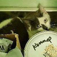Adopt A Pet :: Alex - Queenstown, MD