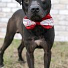 Adopt A Pet :: Spencer - ADOPTION PENDING!!