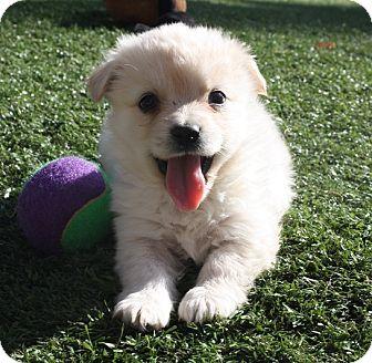 Meet Paddington A Dog For Adoption