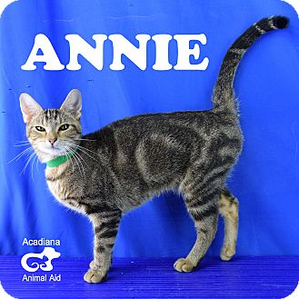 Domestic Shorthair Cat for adoption in Carencro, Louisiana - Annie