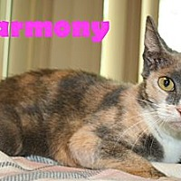 Adopt A Pet :: Harmony - East Stroudsburg, PA