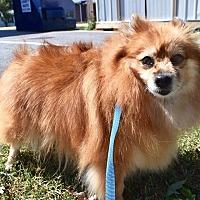 Adopt A Pet :: Margie - Manassas, VA