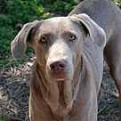 Adopt A Pet :: Bella B