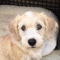 Adopt A Pet :: Penny - Long Beach, CA