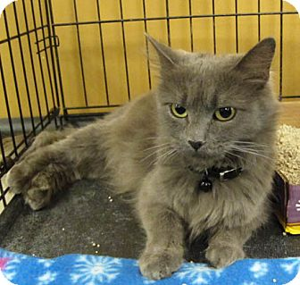 Domestic Longhair Cat for adoption in San Leandro, California - Lily