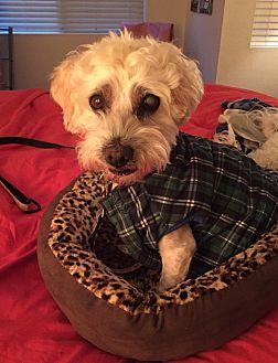 Adopt A Pet :: Michael Scott  - Renton, WA