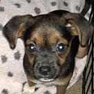 Adopt A Pet :: Mawhonic