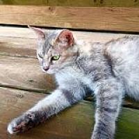 Adopt A Pet :: Erica's Girl - Delmont, PA