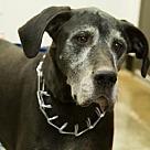 Adopt A Pet :: Linkin