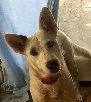 Hopeful Paws Dog Rescue Long Beach