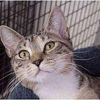 Adopt A Pet :: Clover - Deerfield Beach, FL