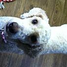 Adopt A Pet :: Alana Zoe