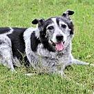 Adopt A Pet :: MR. BEAR