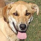 Adopt A Pet :: Ro