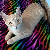 Adopt A Pet :: Biskit - Alamogordo, NM