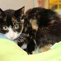 Adopt A Pet :: NUTMEG - Hampton Bays, NY
