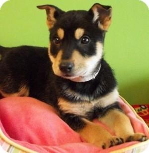 Husky Dogs For Adoption In Ohio