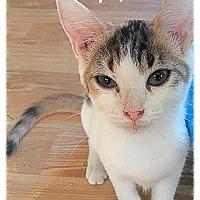 Adopt A Pet :: April MKK - Washington, DC