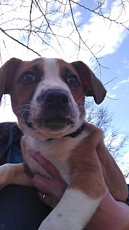 Adopt A Pet :: Maxton  - Waxhaw, NC