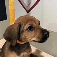 Adopt A Pet :: I1301381 - Pomona, CA