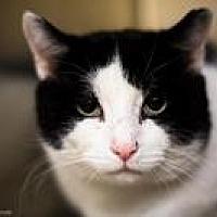 Adopt A Pet :: Ferdinand - Worcester, MA
