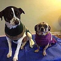 Adopt A Pet :: Spot And Ricco - Ponca City, OK