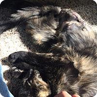 Adopt A Pet :: Clover - Ogallala, NE