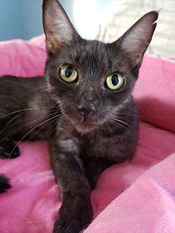 Adopt A Pet :: Frau  - Troy, MI