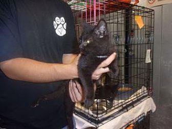 Adopt A Pet :: Josie  - Princeton, WV