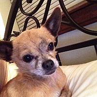 Adopt A Pet :: Chico - Ardmore, OK