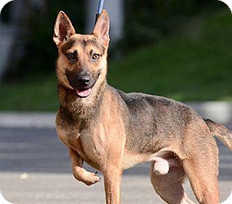 Bc Dog Rescue Surrey