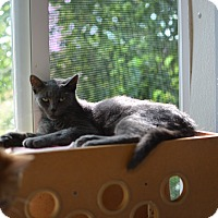 Adopt A Pet :: Layden - Grinnell, IA