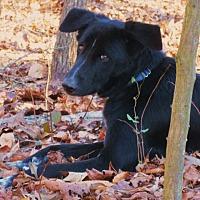 Adopt A Pet :: ARAMIS - Lincolndale, NY