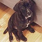 Adopt A Pet :: Niskanen