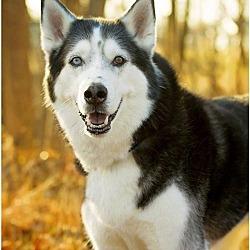 Puppies for Sale in Cedar Rapids Iowa - Adoptapet com