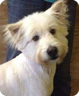 Briard Mix Dog for adoption in Gainesville, Florida - Noelle